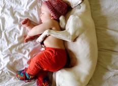Rešen pes, ki se boji vsakega človeka, razen tega 11-mesečnega dojenčka