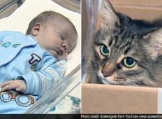 Tega dojenčka so odvrgli v škatli in ga pustili zmrzovati. Ko ga je našla ta potepuška mačka ... GANLJIVO!