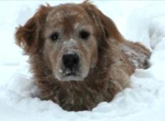 Zvest kuža bedel ob podhlajenem lastniku - več kot 20 ur