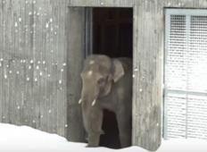 Zaradi zime so zaprli živalski vrt. Nato je delavec posnel reakcijo živali, ko so videle sneg ...