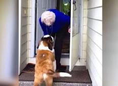 Umrl ji je mož in bila je osamljena. Nekega dne pred vrati zagleda sosedovega kužka in začne se najbolj srčno prijateljstvo ...