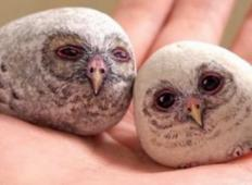 Umetnik uporablja kamne iz katerih ustvari živali! Čudovito!