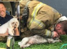 Kužku je zaradi zadušitve pretil konec življenja.  Potem mu je ta gasilec 20 minut dajal umetno dihanje in postal junak ...