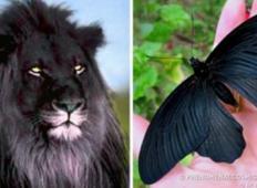 17 živali, ki so barve noči... VAU!