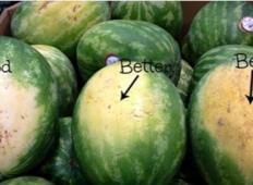 5 ključnih nasvetov, kako izbrati pravilno lubenico