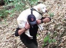 Moški je našel slepega psa, ki je bil pogrešan več kot teden dni