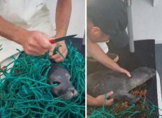 Delavec na odprtem morju zagledal majhnega tjulna, ki se je ujel v mrežo. Kar je storil potem ...