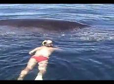 Sredi oceana opazili nemočnega kita. Mislili so, da je izgubil bitko z življenjem, toda kar se zgodi potem, vam bo orosilo oči ...
