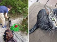 Sin in oče tretirata tole mačko z ljubeznijo. Tole se zgodi, ko se naslednji dan vrne.