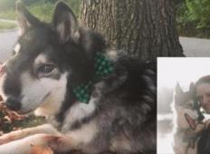 Ganljivo slovo: Zadnji meseci v psičkovem življenju so bili najlepši