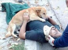 Tale pes noče zapustiti lastnika, ki se je poškodoval pri padcu