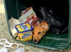 Selila se je k svojemu fantu in nepotrebne stvari odvrgla v smeti. Tam se je znašla tudi njena psička, toda karma se ji vrne ...