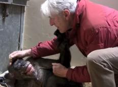 59-letna šimpazinja bila tako bolna, da ni mogla več niti jesti. Toda potem prepozna starega prijatelja ...