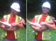 Majhen jelenček se je ujel v trnje. Ko ga je rešil tale delavec, ni želel zapustiti njegovega naročja ...