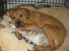Mačke in psi v isti hiši – medsebojna ljubezen, ki vas bo očarala!