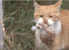 Ta mačka ni želela vzeti hrane, razen če je bila v vrečki. Ko so ji sledili, kaj počne s hrano, so bili ganjeni ...