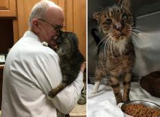 Ta maček je živel na ulici in njegov obraz je bil iznakažen. Poglejte, kaj se zgodi, ko ga posvoji veterinar ...