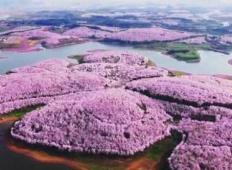 Pomladni raj na Kitajskem. Poglejte, kako fantastično zgleda, ko se razcvetijo češnje!