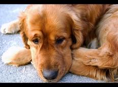 Pes je na letališču pričakal svojega gospodarja. Nista se videla že tri leta in poglejte, kaj se je zgodilo ...