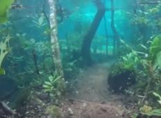 Prečudovit prizor! Podvodni gozd je nekaj prečudovitega in vzel vam bo sapo!