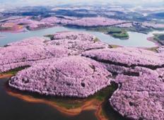 Ko češnje cvetijo na Kitajskem naslikajo najlepši kraj na svetu
