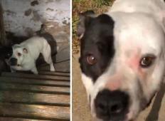 Kupil je novo hišo, v kleti pa našel zaprtega prestrašenega kužka. Poglejte njegovo reakcijo, ko ga je rešil ...