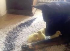 Nemški ovčar si je našel 4 nove prijatelje. Počakajte da vidite, kdo so