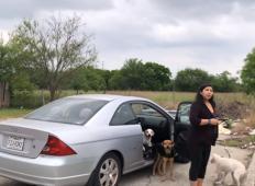 Ženska je zavila v stransko ulico in zavrgla štiri kužke. Kako lahko to stori?!
