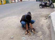 Kužek je negiben ležal na tleh, imel je polno ran in mislili so, da je poginil. Potem pa začne migati z repom ...