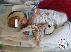 Ti mali slovenski junaki se borijo za življenje. Poglejte, na kako srčkan način jim pri tem pomagajo hobotnice ...