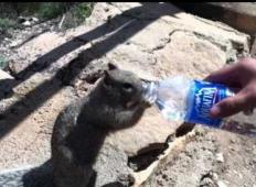 Žejna veverica je dvignila roke v zrak. Ta človek je potem razumel, kaj želi od njega ...