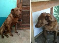 Izgubila se je in dve leti je tale psička preživela v zavetišču. Poglejte, kaj se zgodi, ko prepozna znani vonj ...