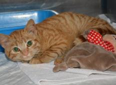 Slovenskemu zavetišču so lastniki po letu in pol vrnili tole mačko. Poglejte, v kakšnem stanju je sedaj ...