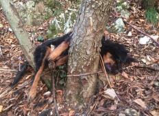 Slovenec v gozdu našel odvrženega psa. Kdo naredi tako nagnusno dejanje?!