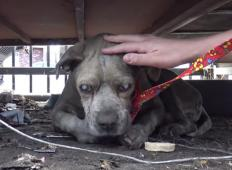 Tega starega in slepega psa so našli na smetišču. Umiral je pri živem telesu, toda potem se pojavita mož in žena ...
