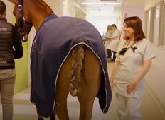 Ta magičen konj ima šesti čut. Poglejte, kaj se zgodi s pacienti, ko vstopi v bolnišnico ...