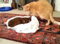 Imel je dve mački, ena je izgubila boj z rakom. Poglejte, kako se je druga mačka poslavljala od nje ...
