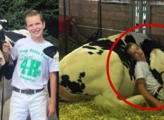 Ta 15-letni fant in krava spita eden poleg drugega. Prizor, ki je navdušil na tisoče ljudi!