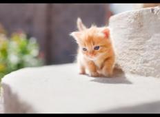 Ta izjemno ljubka mačka ostane celo življenje majhna. Poglejte tole!