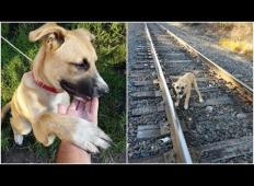 Okrutno! Nekdo je privezal psa za železniške tire. Naključen mimoidoči ga je rešil in ...