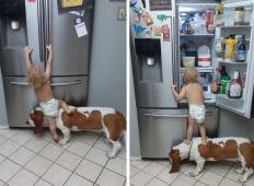 Dojenček v plenički je želel hrano iz hladilnika. Približal se mu je družinski kužek in ne boste verjeli svojim očem, kaj sta storila ...