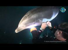 Delfin se je ranil in nujno je potreboval pomoč. Svoje telo je prepustil potapljačem, ki so storili tole ...