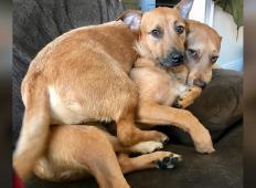 Lastnica s svojo psičko odšla na tržnico. Toda ko sta tam videli brezdomnega kužka, se ji ni sanjalo kaj sledi ...