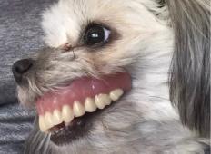 Oče po spancu ni več našel svoje zobne proteze. Ko je zagledal družinsko psičko ...
