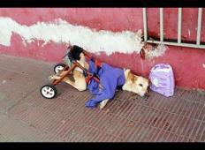 Psičko z invalidskim vozičkom so odvrgli ob cesti. Trpela je, toda med angele je odšla nekje drugje ...