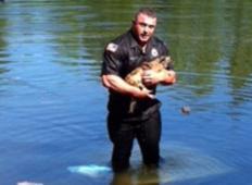 Avto je zletel v jezero, lastnica se je rešila, toda njen kužek je ostal pod vodo. Tale policist je potem storil nekaj izjemnega ...