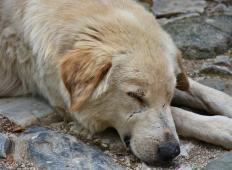 Popolnoma zdrav kužek je umrl po sprehodu. To je opozorilo, ki bi ga morali prebrati vsi lastniki kužkov!