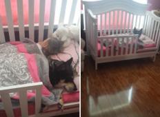 Mama je mislila, da je družinski kužek pobegnil od hiše. Toda ko je pogledala v sobo njene dojenčice ... GANLJIVO!