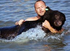 Prestrašen medved v paniki stekel v morje. Tale moški je plaval za njim in mu s tem dejanjem REŠIL življenje!