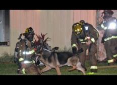 Otroka ostala ujeta v goreči hiši. Družinski kužek je gasilcem pokazal, kam morajo iti ...